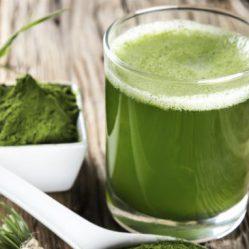 Spiruline, l'algue précieuse